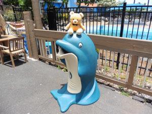 イルカとも遊べるプログラムもあるんだね!